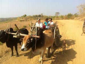 bull cart in Myanmar