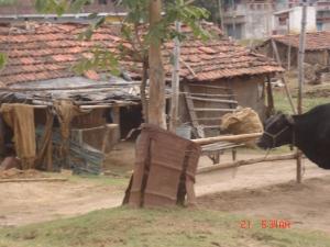India June '05 068